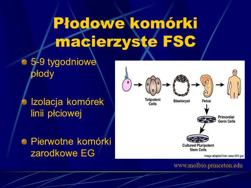 Płodowe komórki macierzyste FSC