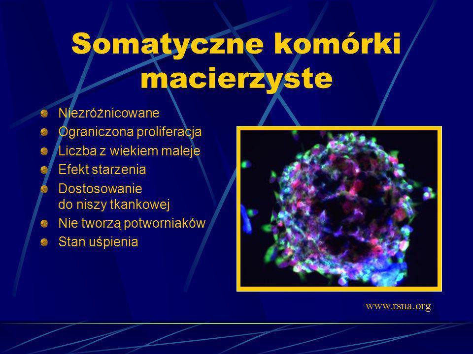Somatyczne komórki macierzyste