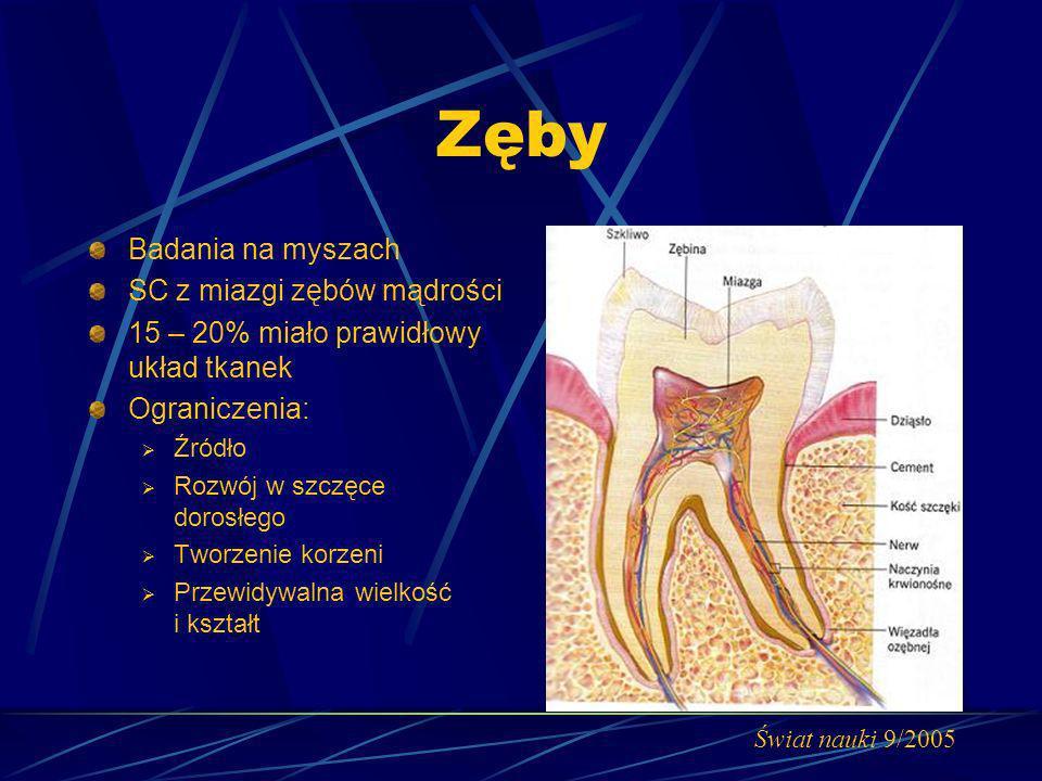 Zęby Badania na myszach SC z miazgi zębów mądrości