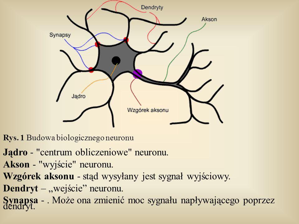 Jądro - centrum obliczeniowe neuronu. Akson - wyjście neuronu.