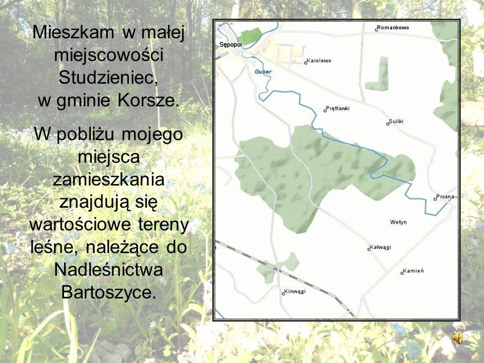 Mieszkam w małej miejscowości Studzieniec, w gminie Korsze.