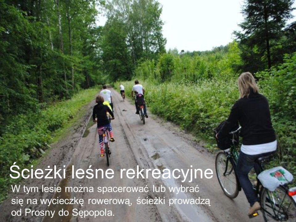 Ścieżki leśne rekreacyjne