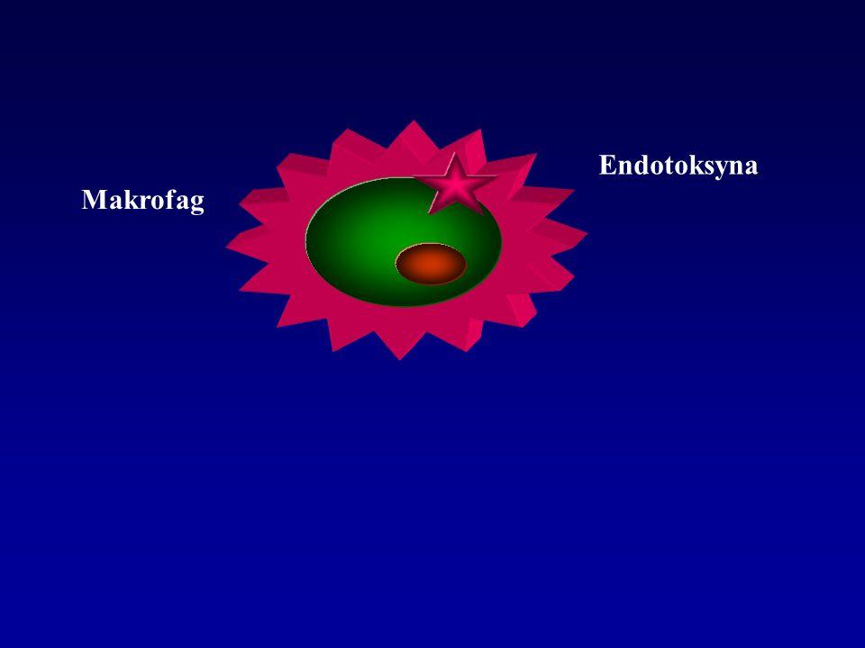 Endotoksyna Makrofag