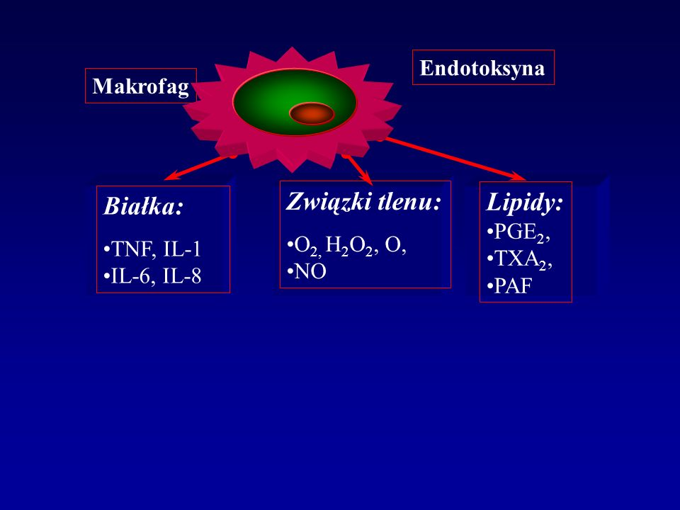Związki tlenu: Lipidy: Białka: Endotoksyna Makrofag PGE2, O2, H2O2, O,