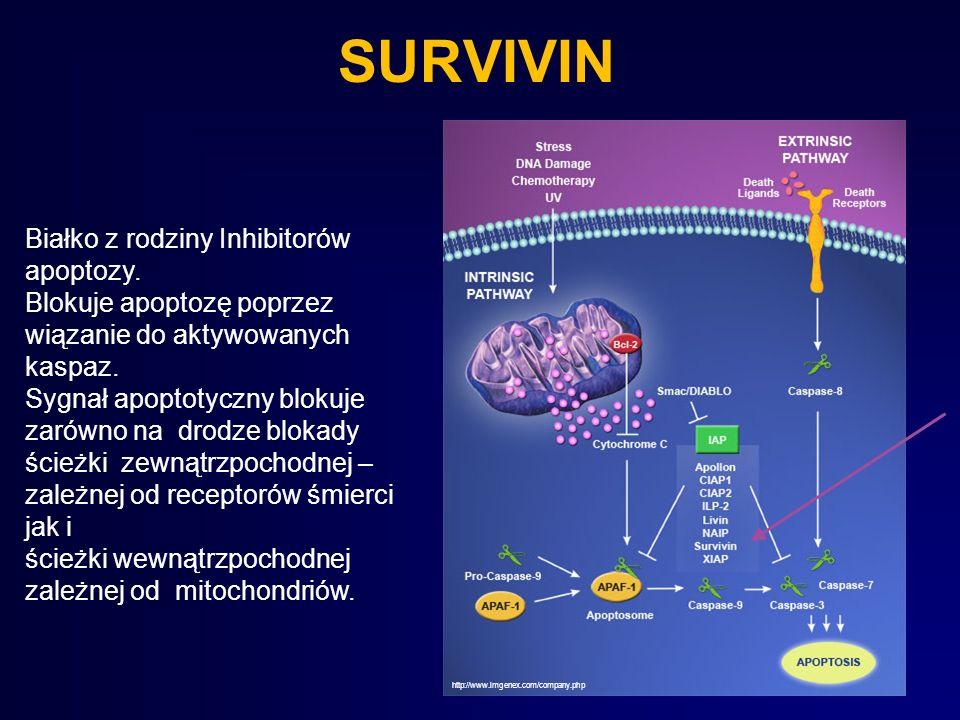 SURVIVIN Białko z rodziny Inhibitorów apoptozy.