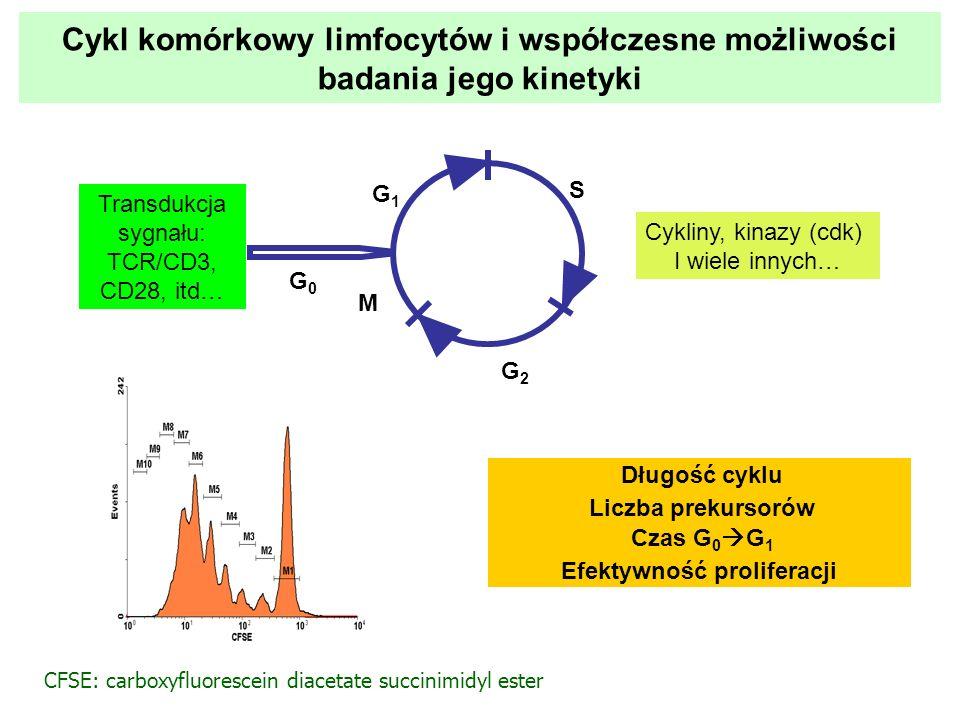 Cykl komórkowy limfocytów i współczesne możliwości badania jego kinetyki