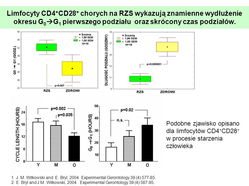 Limfocyty CD4+CD28+ chorych na RZS wykazują znamienne wydłużenie okresu G0G1 pierwszego podziału oraz skrócony czas podziałów.