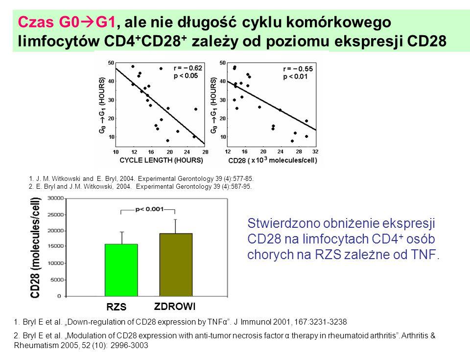 Czas G0G1, ale nie długość cyklu komórkowego limfocytów CD4+CD28+ zależy od poziomu ekspresji CD28