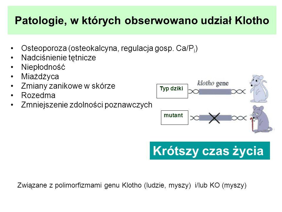 Patologie, w których obserwowano udział Klotho