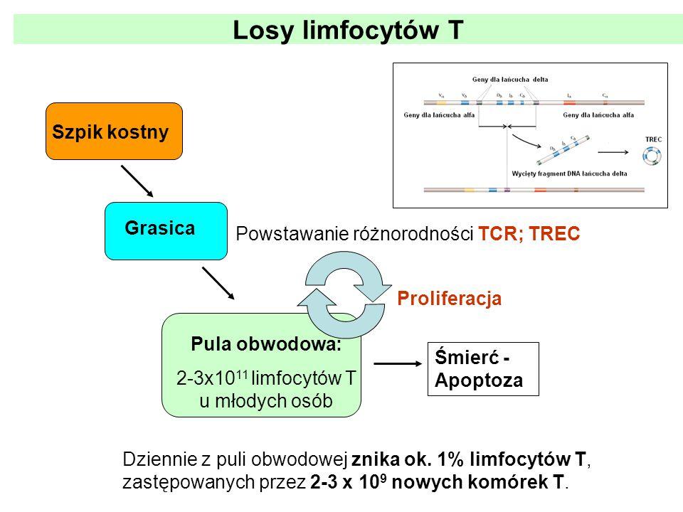 2-3x1011 limfocytów T u młodych osób
