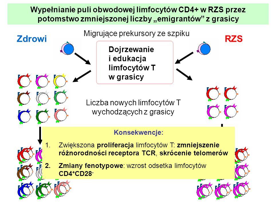 """Wypełnianie puli obwodowej limfocytów CD4+ w RZS przez potomstwo zmniejszonej liczby """"emigrantów z grasicy"""