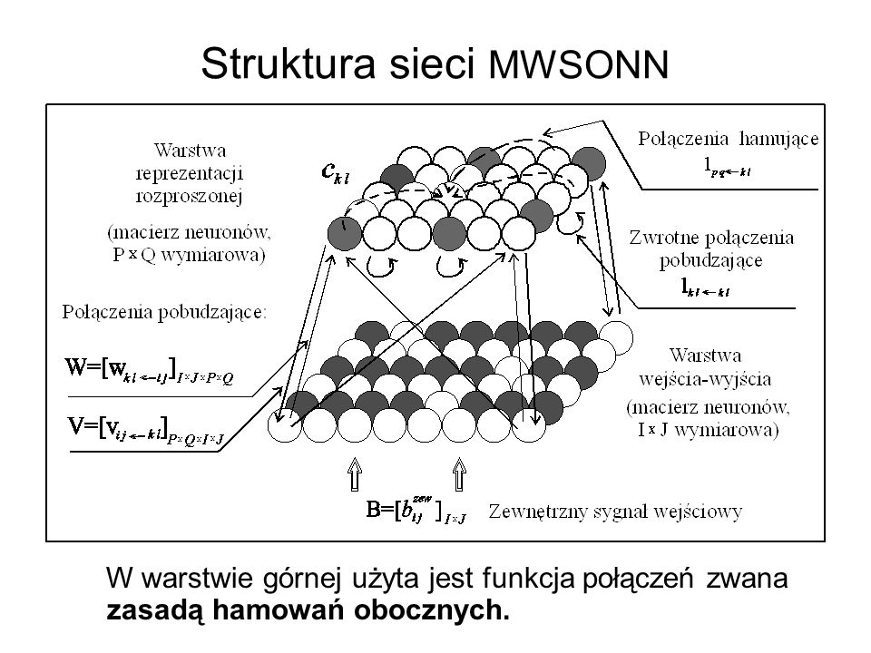 Struktura sieci MWSONN