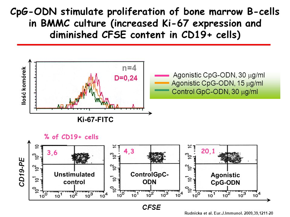 CpG-ODN stimulate proliferation of bone marrow B-cells in BMMC culture (increased Ki-67 expression and diminished CFSE content in CD19+ cells)