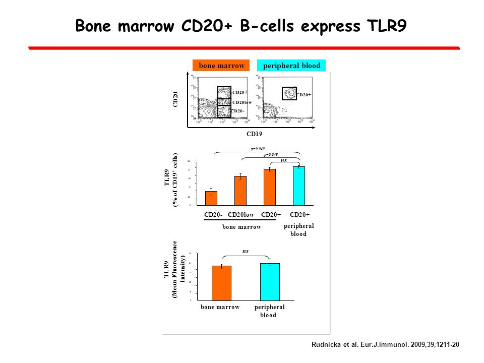 Bone marrow CD20+ B-cells express TLR9