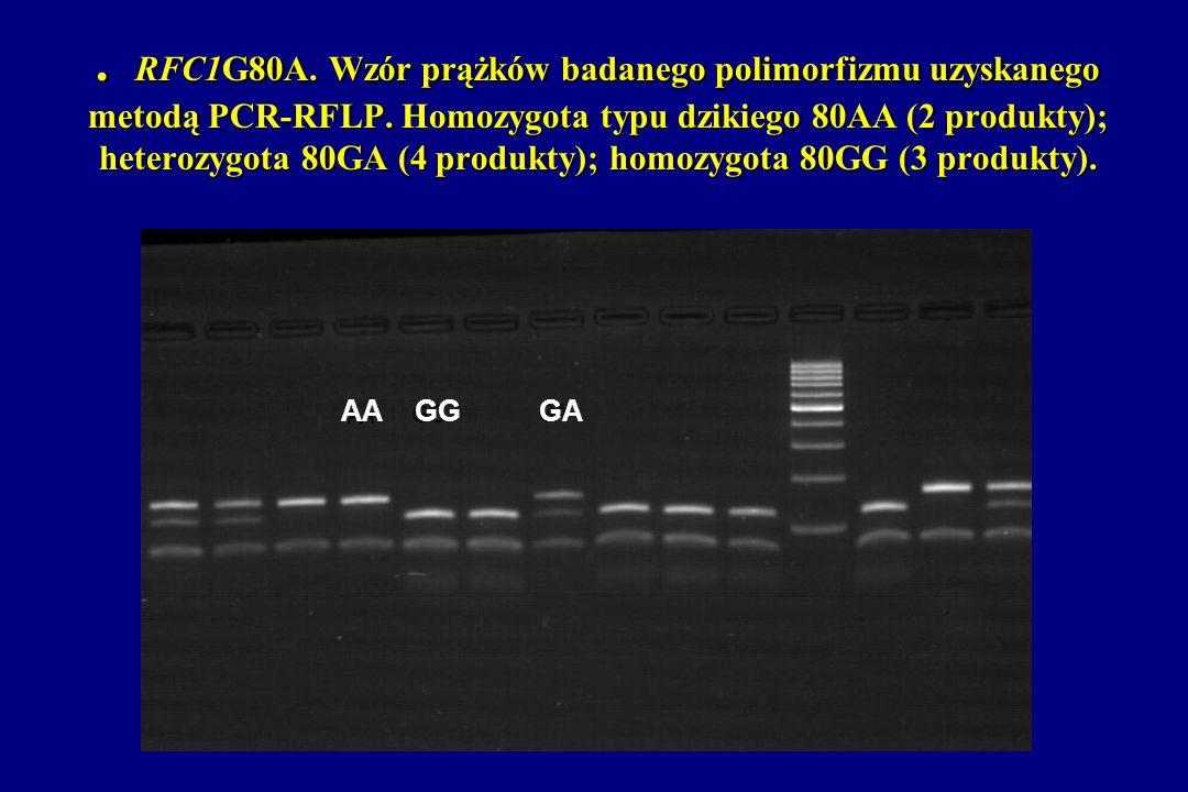 . RFC1G80A. Wzór prążków badanego polimorfizmu uzyskanego metodą PCR-RFLP. Homozygota typu dzikiego 80AA (2 produkty); heterozygota 80GA (4 produkty); homozygota 80GG (3 produkty).