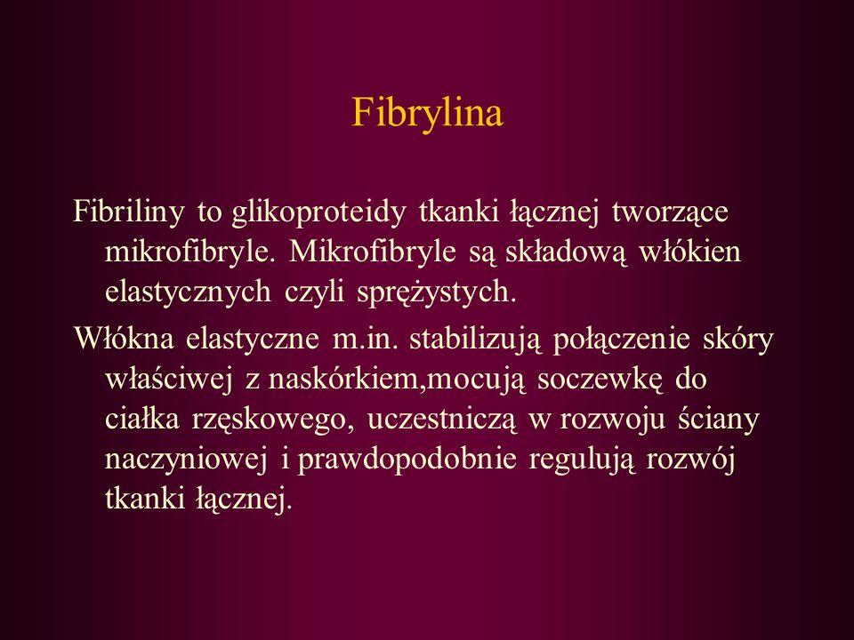 Fibrylina Fibriliny to glikoproteidy tkanki łącznej tworzące mikrofibryle. Mikrofibryle są składową włókien elastycznych czyli sprężystych.