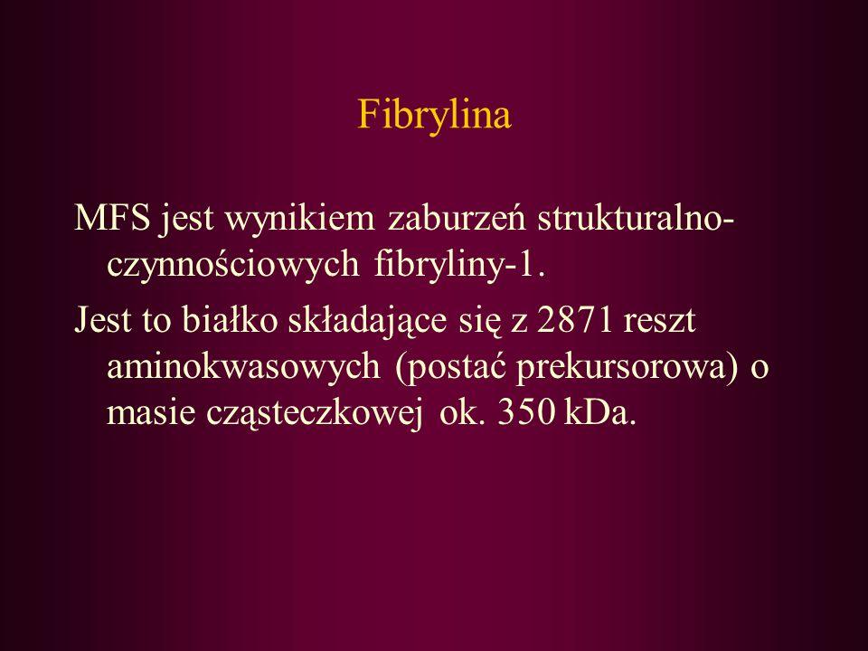 FibrylinaMFS jest wynikiem zaburzeń strukturalno-czynnościowych fibryliny-1.