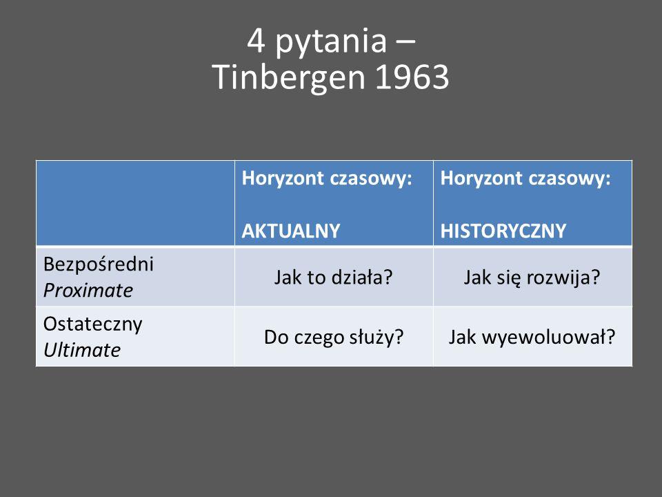 4 pytania – Tinbergen 1963 Horyzont czasowy: AKTUALNY