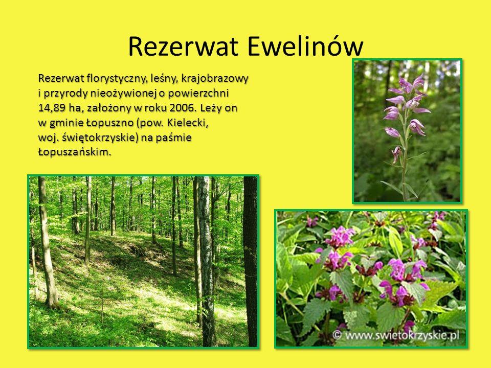 Rezerwat Ewelinów