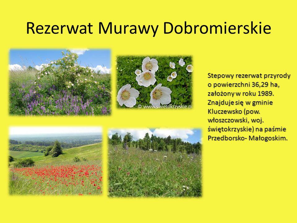 Rezerwat Murawy Dobromierskie