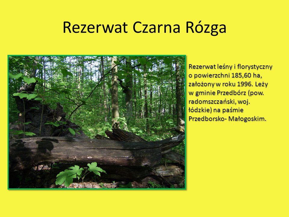 Rezerwat Czarna Rózga