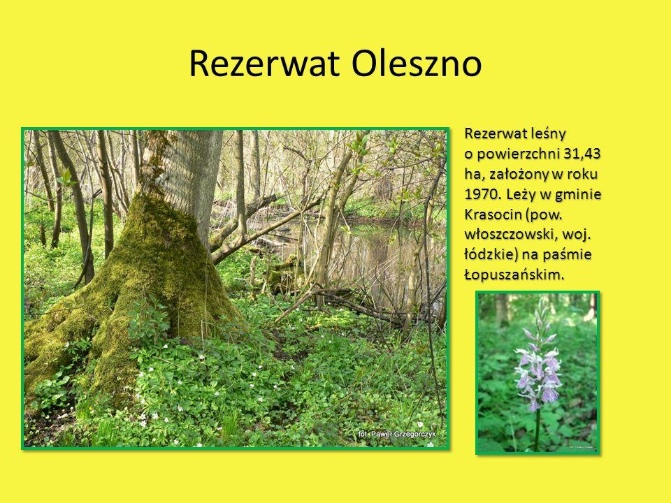 Rezerwat Oleszno