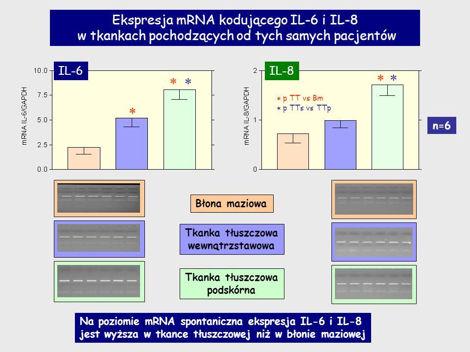      Ekspresja mRNA kodującego IL-6 i IL-8