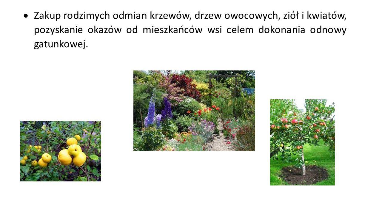 Zakup rodzimych odmian krzewów, drzew owocowych, ziół i kwiatów, pozyskanie okazów od mieszkańców wsi celem dokonania odnowy gatunkowej.