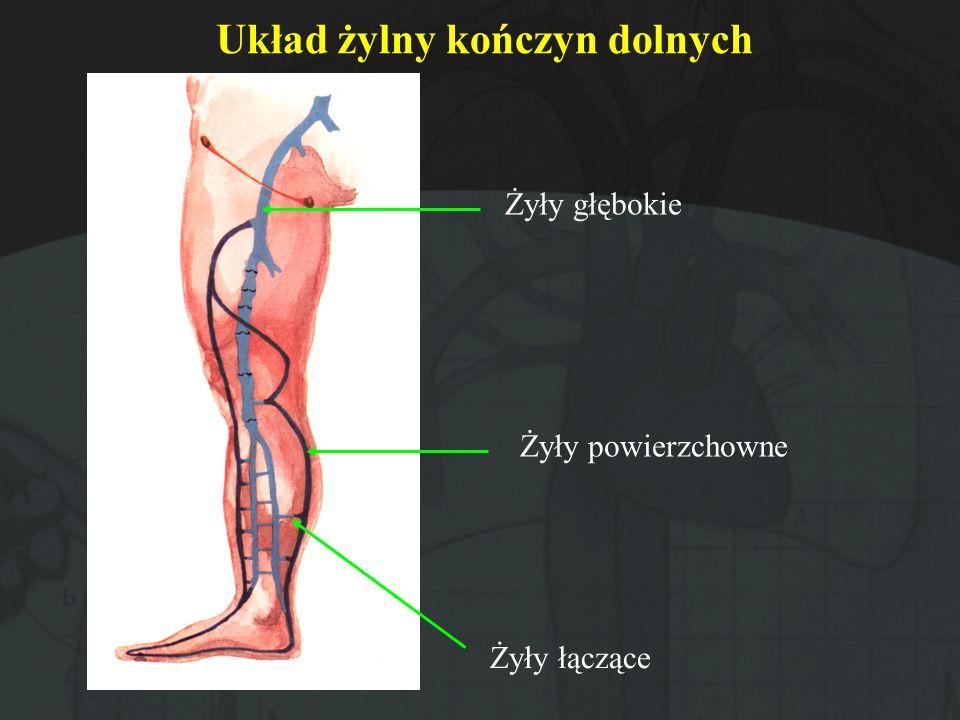 Układ żylny kończyn dolnych
