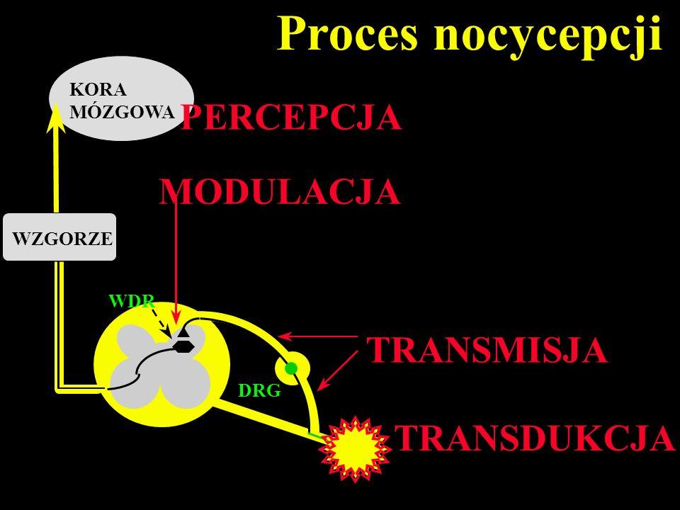 Proces nocycepcji PERCEPCJA MODULACJA TRANSMISJA TRANSDUKCJA KORA