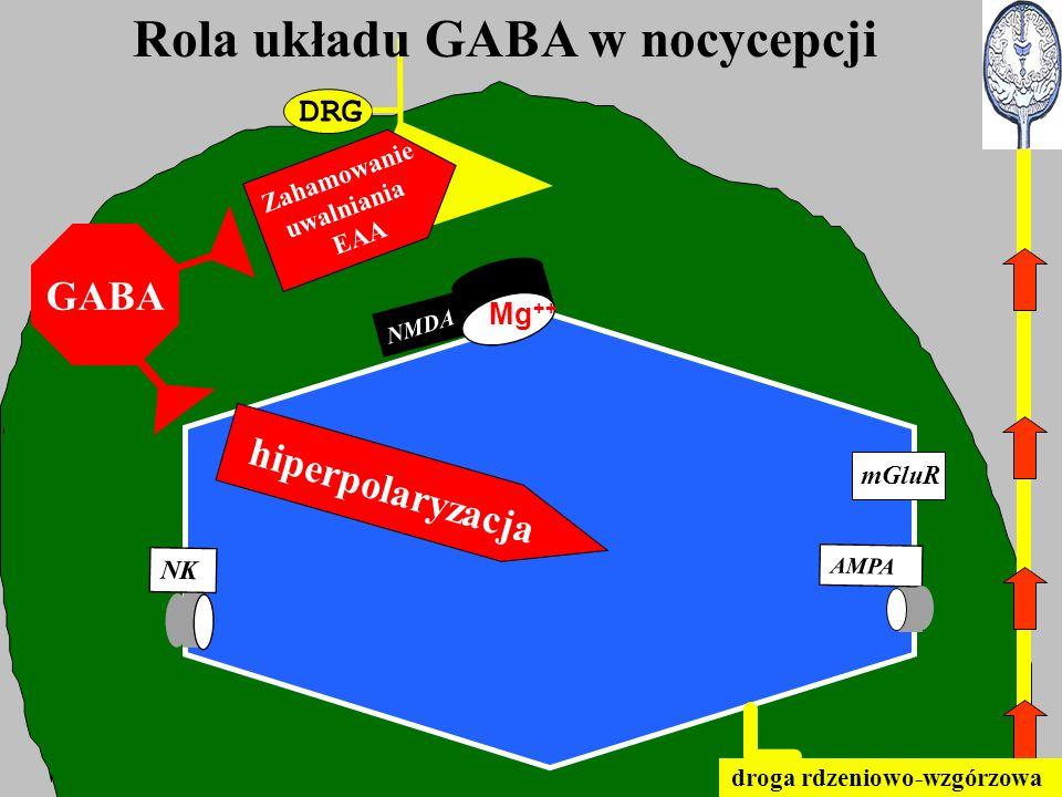 Rola układu GABA w nocycepcji