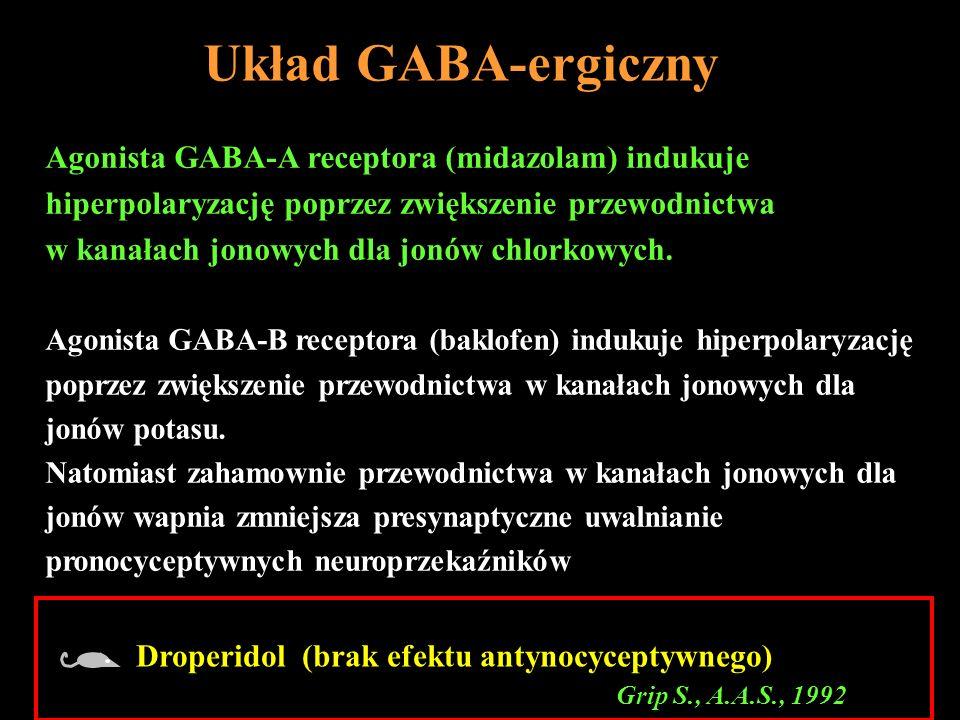 Układ GABA-ergiczny Agonista GABA-A receptora (midazolam) indukuje