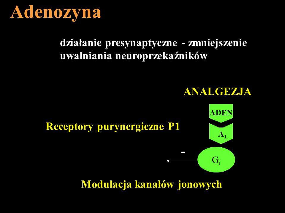 Adenozyna - działanie presynaptyczne - zmniejszenie