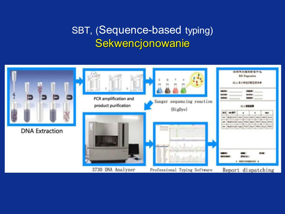 SBT, (Sequence-based typing) Sekwencjonowanie