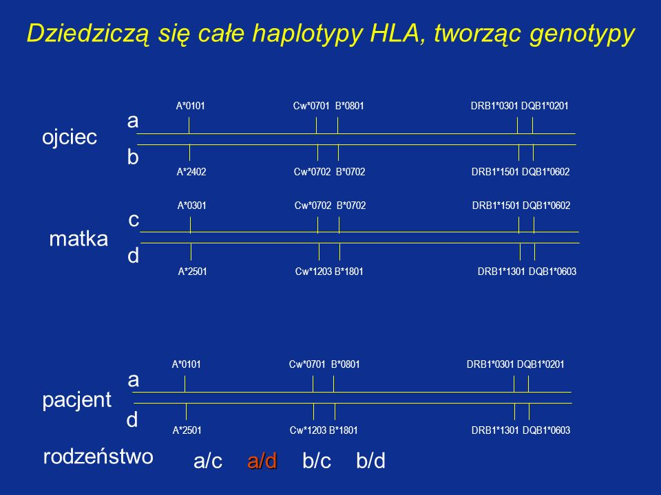 Dziedziczą się całe haplotypy HLA, tworząc genotypy