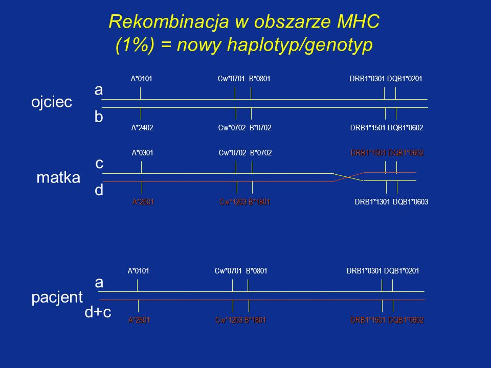Rekombinacja w obszarze MHC (1%) = nowy haplotyp/genotyp