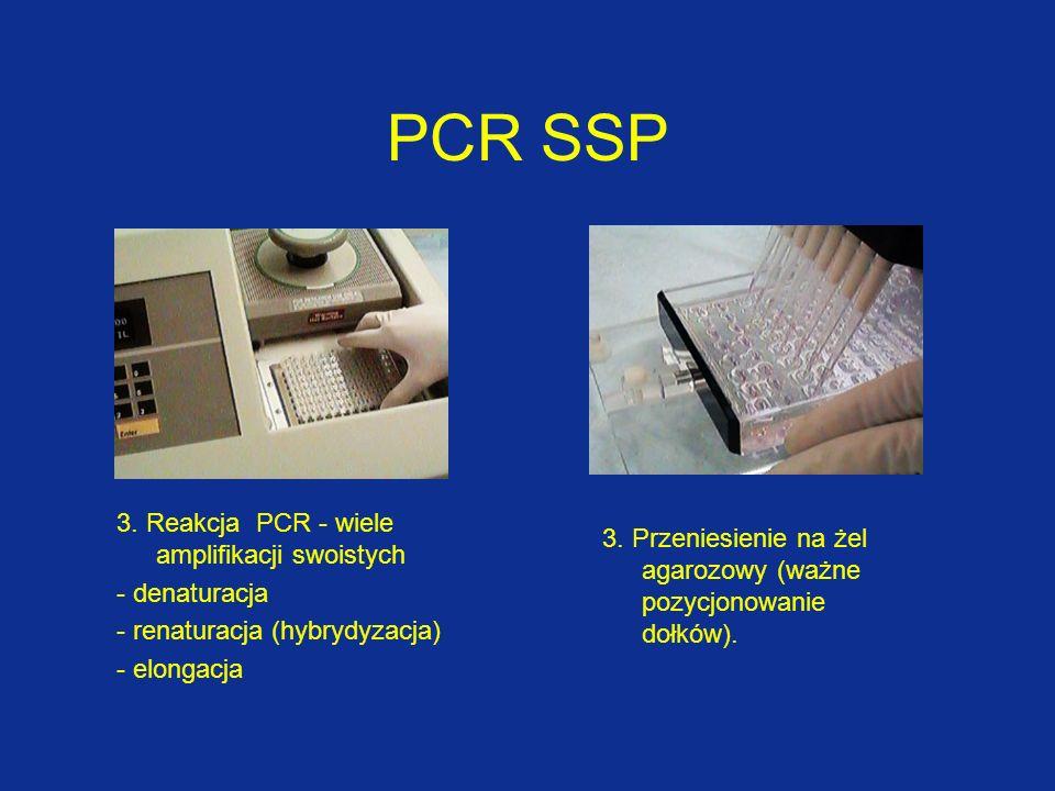 PCR SSP 3. Reakcja PCR - wiele amplifikacji swoistych