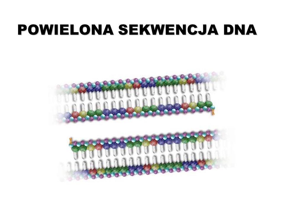 POWIELONA SEKWENCJA DNA