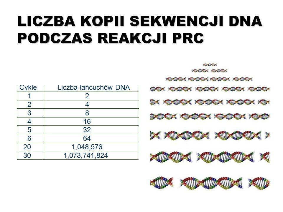 LICZBA KOPII SEKWENCJI DNA PODCZAS REAKCJI PRC