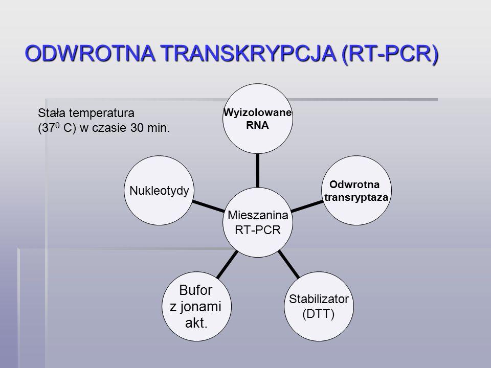 ODWROTNA TRANSKRYPCJA (RT-PCR)