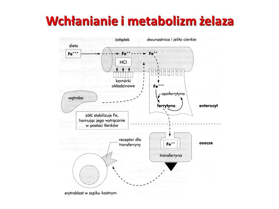 Wchłanianie i metabolizm żelaza