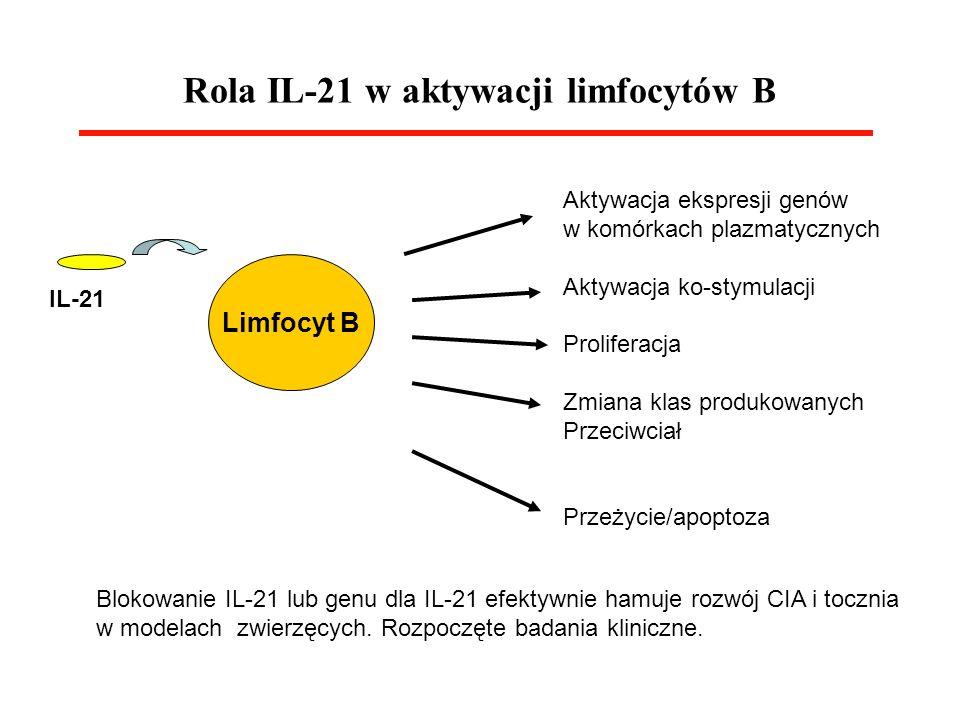 Rola IL-21 w aktywacji limfocytów B