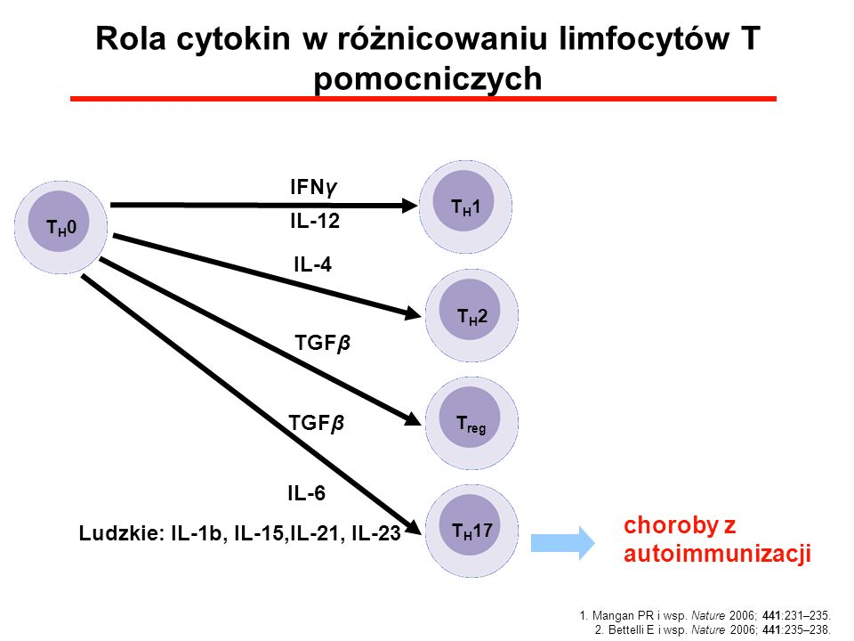 Rola cytokin w różnicowaniu limfocytów T pomocniczych
