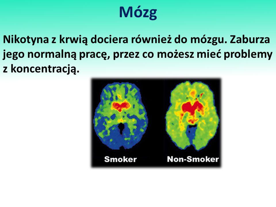 Mózg Nikotyna z krwią dociera również do mózgu.