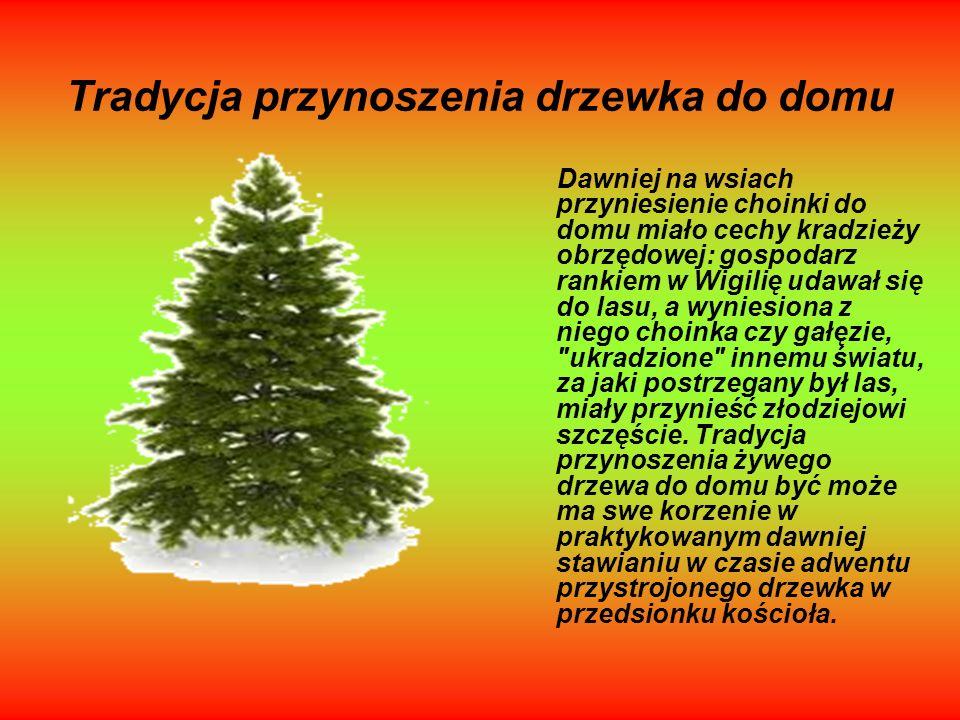 Tradycja przynoszenia drzewka do domu