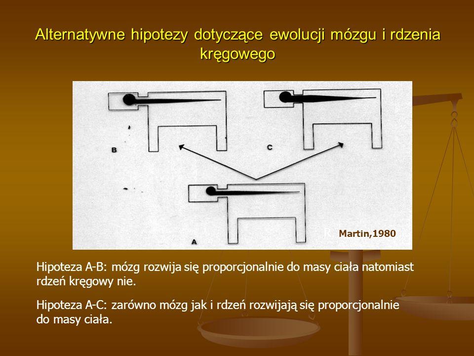 Alternatywne hipotezy dotyczące ewolucji mózgu i rdzenia kręgowego