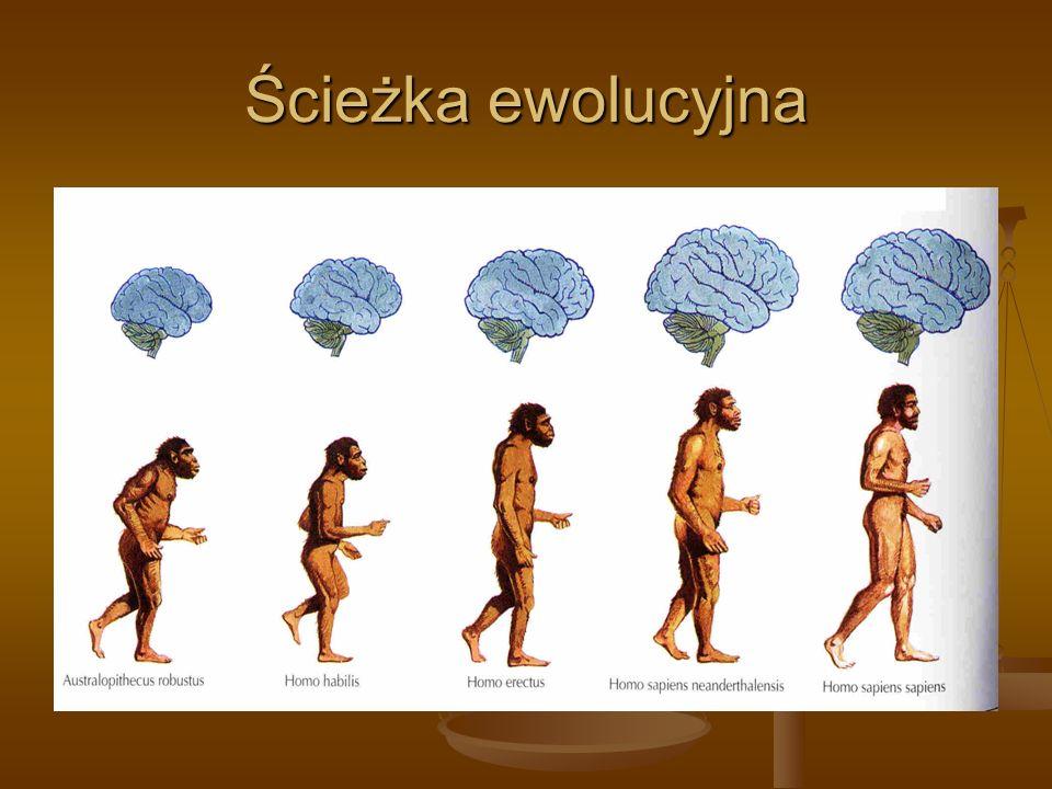 Ścieżka ewolucyjna