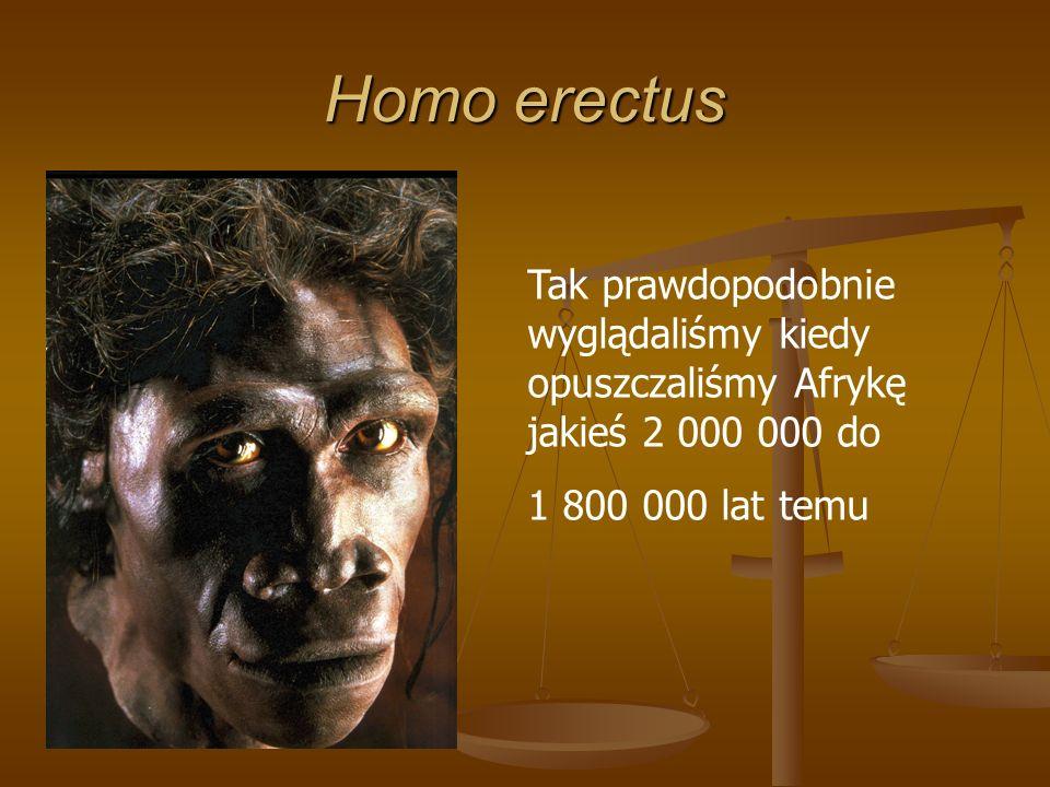 Homo erectus Tak prawdopodobnie wyglądaliśmy kiedy opuszczaliśmy Afrykę jakieś 2 000 000 do.