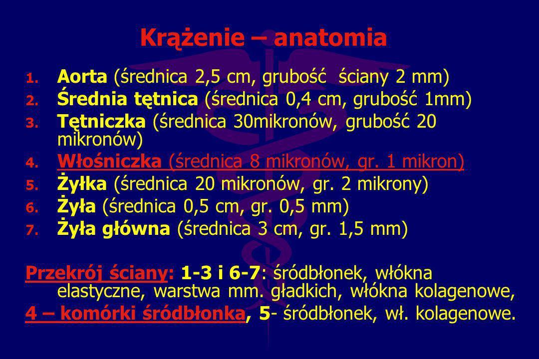 Krążenie – anatomia Aorta (średnica 2,5 cm, grubość ściany 2 mm)