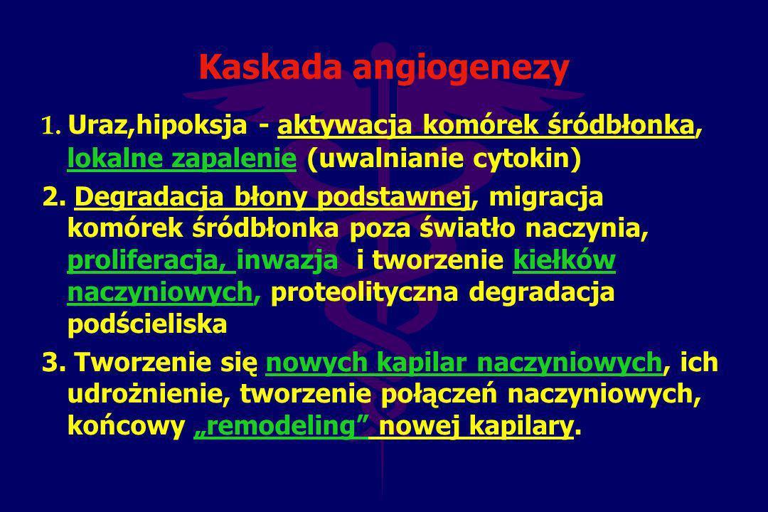 Kaskada angiogenezy 1. Uraz,hipoksja - aktywacja komórek śródbłonka, lokalne zapalenie (uwalnianie cytokin)